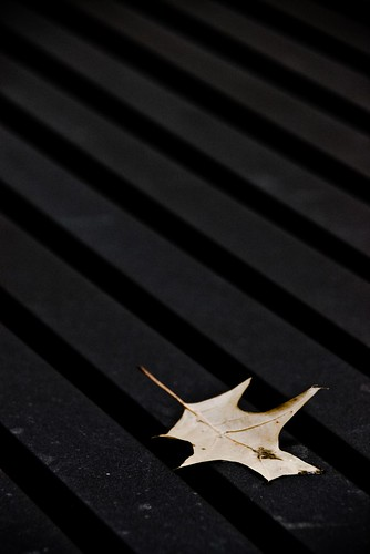 Leaf on Black | by J e n s
