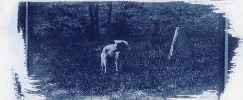 Cyanotype and Vinegar Experiments - Coyote-4 | by Ginger Burrell