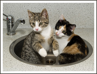 Poeka and Pebbel in the sink | by Jan Gee