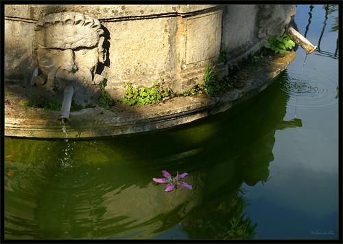 Reflejos en el estanque del le n jardines de los reales a flickr - Esquelas leon los jardines ...