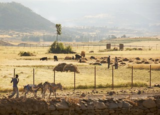 Farmland In Late Afternoon, Axum, Ethiopia | by A.Davey
