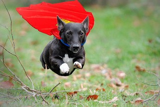 Superdog | by William Krusche