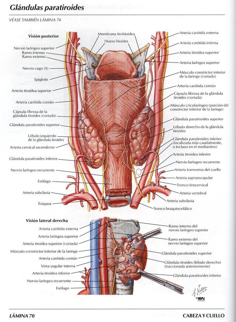Articulosdemedicina.com | juanbatista1863 | Flickr