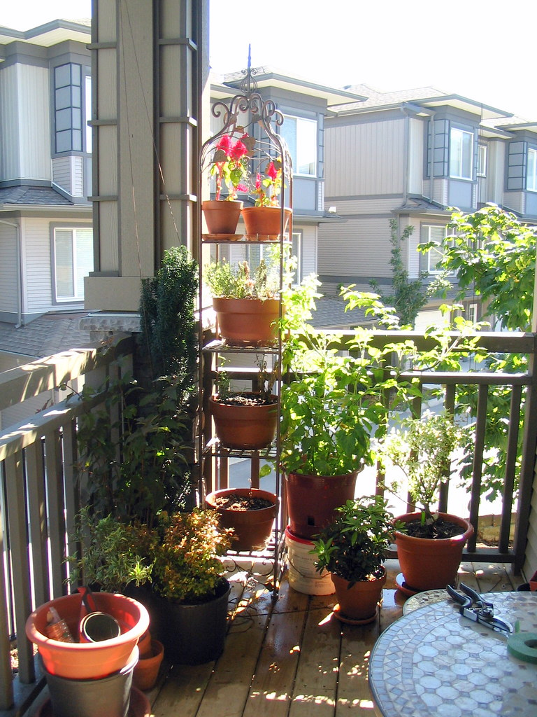 ... Our small balcony garden.jpg - by jfeuchter