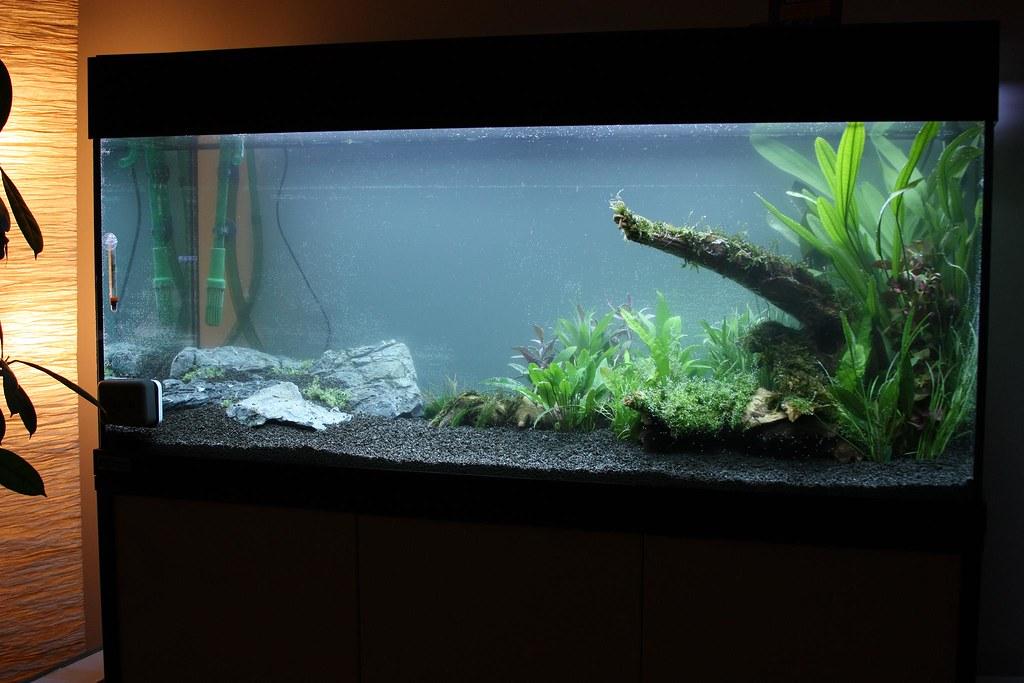 setup the new 240l aquarium aquascape my new 240 litres m flickr