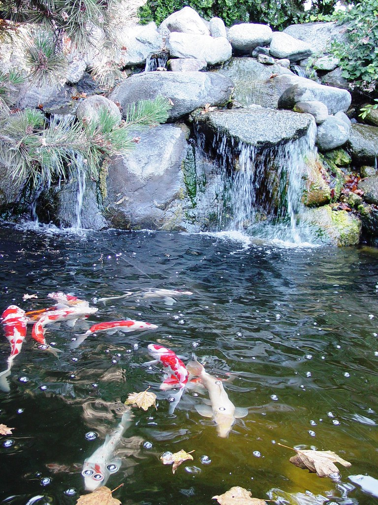 ... Pond And Water Fall Mystic Koi And Water Gardens Upland Califorina | By  Saimo_mx70