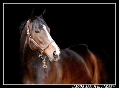 Celtic Charisma (a.k.a Moose) | by Rock and Racehorses
