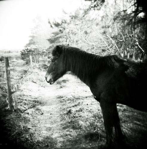 newforest (waybackwhen) | by Monkey Magic
