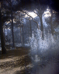 Formby woods, toy camera infrared | by cookie poppets