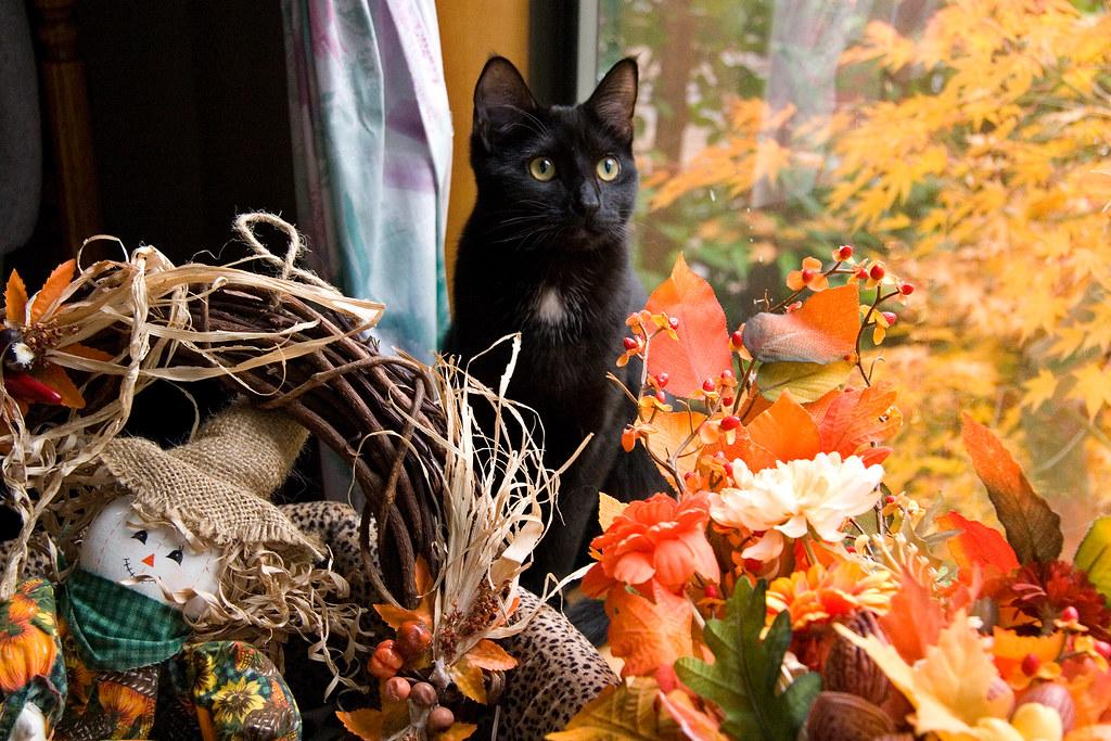 Thanksgiving Kitten Wallpaper Www Picswe Com
