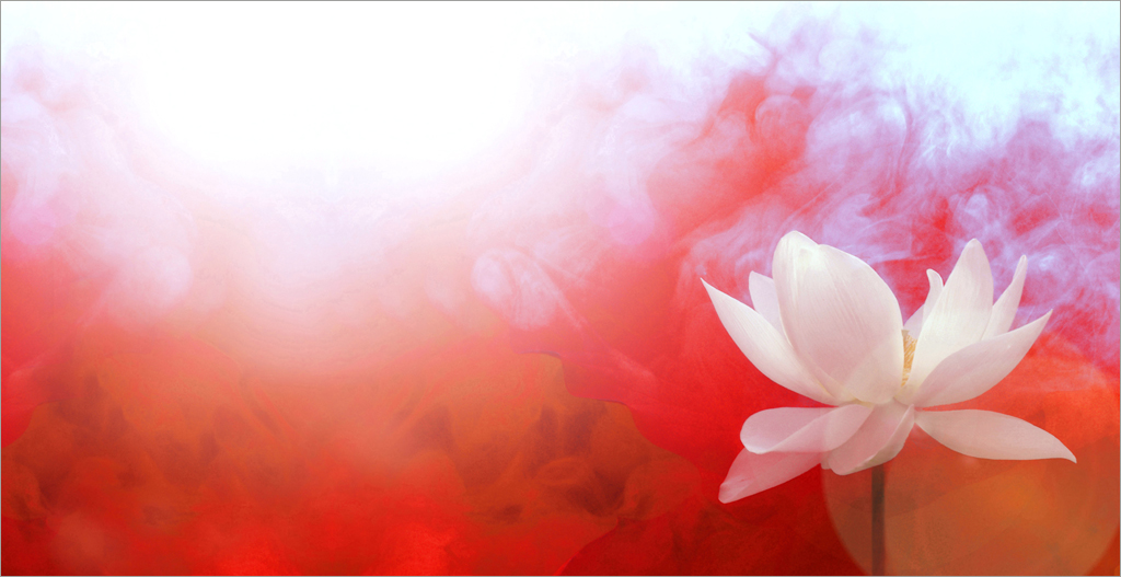 lotus flower with red background red color red red co flickr