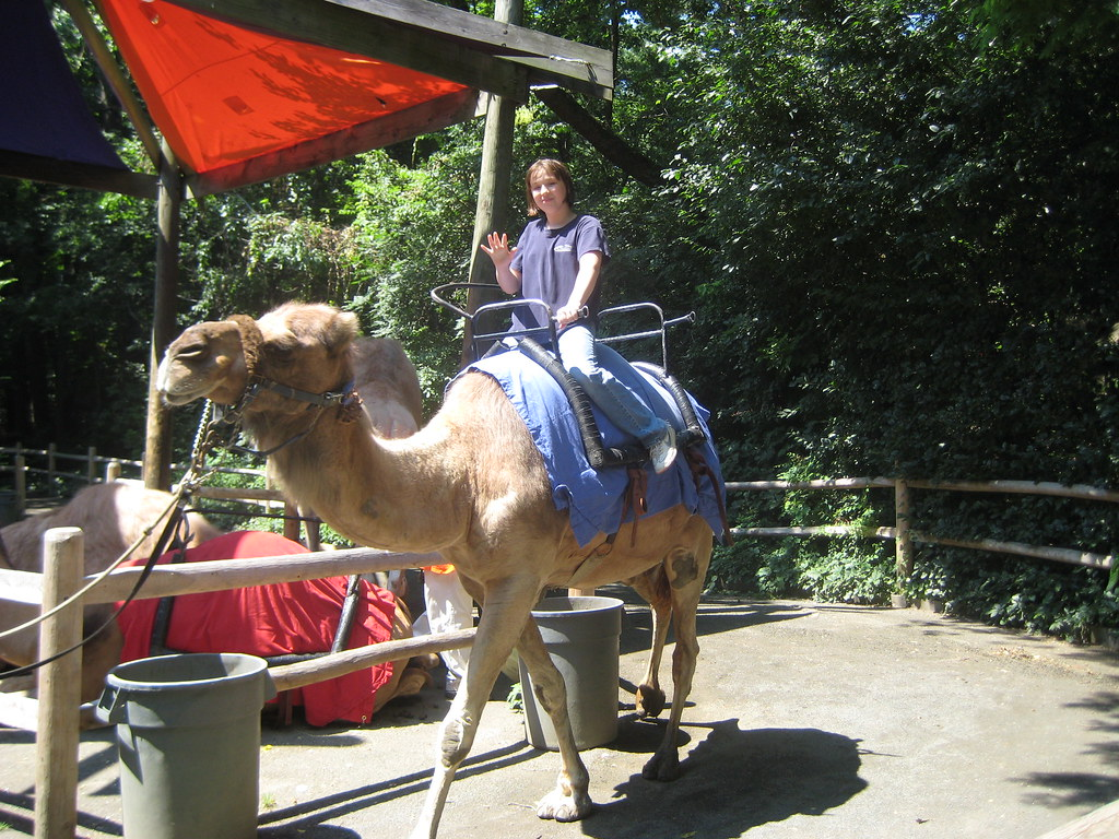 Sage Riding A Camel Bronx Zoo 07 31 07 Linda Larue Flickr