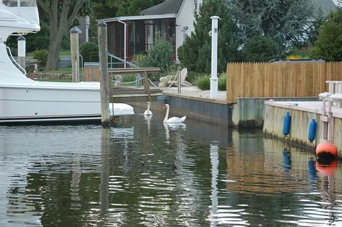 Amityville Long Island Zipcode