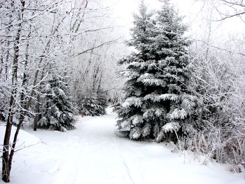 Winter on the Crocus Trail in Manitoba | by Trans Canada Trail / Le sentier Transcanadien