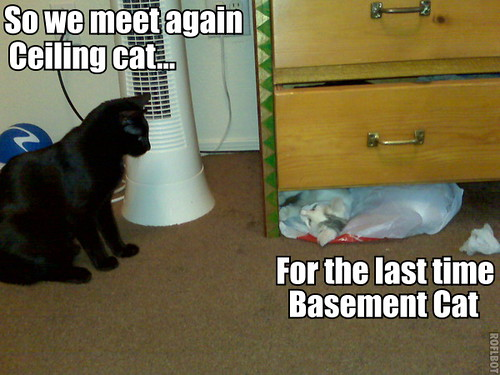 ... Ceiling Cat and Basement Cat showdown   by MichandPhoto & Ceiling Cat and Basement Cat showdown   Created with wigflipu2026   Flickr