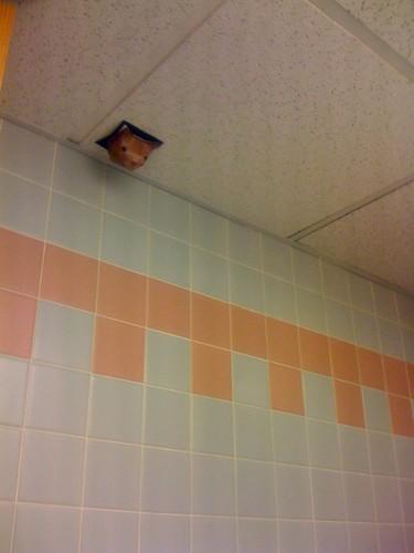 Ceiling cat masturbate