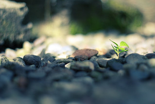 little seedlings never flourish in the soil they have been given, be it ever so excellent, if they are continually pulled up to see if the roots are grateful... | by *Cora