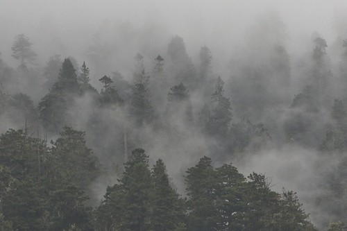 Trees In the Mist | by The Hike Guy