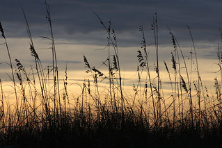 Sunrise Sea Oats Northeast View Atlantic Beach, FL | by kathleenjacksonphotography