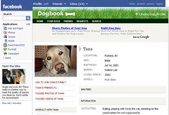Cut Dog Theory: IMA Staff Rob Stein has Dogbook on Profile | by cambodia4kidsorg