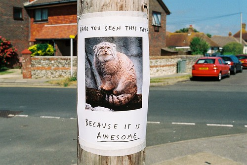 Have You Seen This Cat? | by Lizzy Stewart