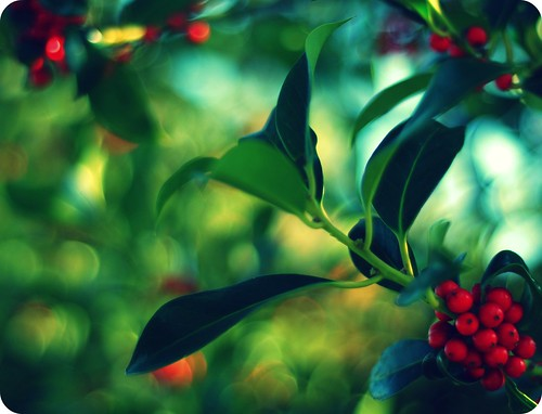 (More) Berry Bokeh | by ~aspidistra~