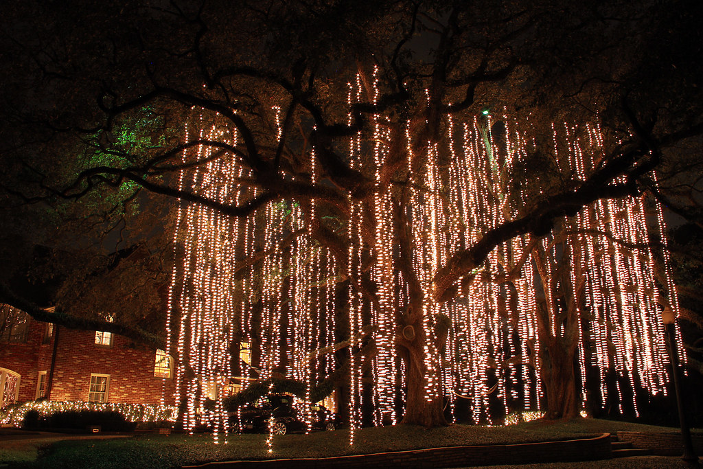 Christmas light spanish moss christmas lights hanging like flickr christmas light spanish moss by lee ann l mozeypictures Image collections