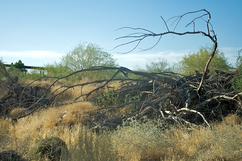 Rio Salado Habitat Restoration Project | by dbostrom