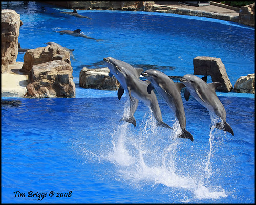 Synchronized swimming, dolphin style | by el__vaquero