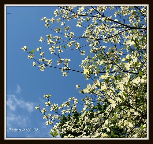A Beautiful Spring Day | by swt snookie