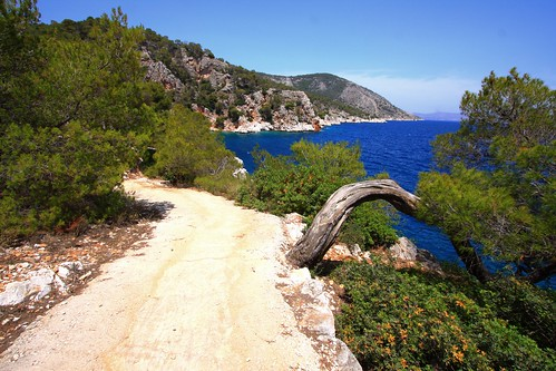 Coastal trail and pines | by Marite2007