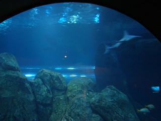 2008 03 16 Camden 018 New Jersey State Aquarium Allie