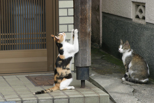 cats in front of a house, Osaka | by jtabn99