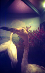 Large Birds pinhole | by Flowerquetzal