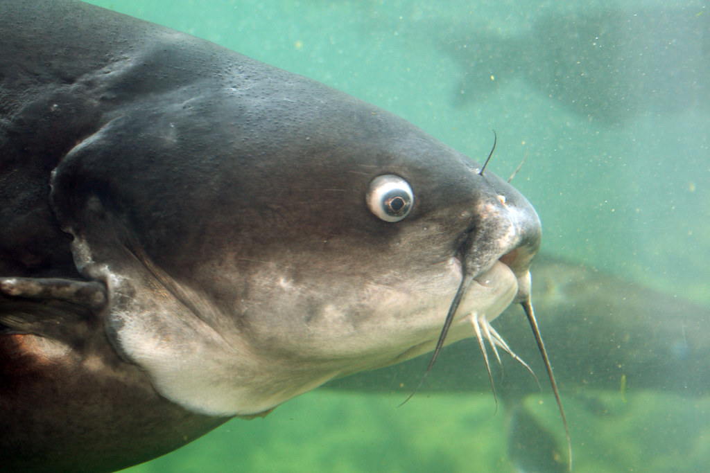 2008-07-25 - Athens, TX - Freshwater Fish Hatchery - 2976