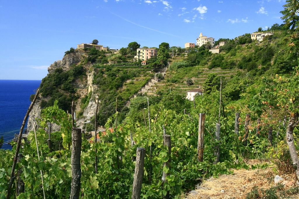 The vineyards of Corniglia