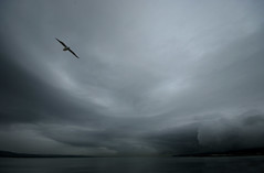 Turner Skyscape with Seagull | by Joe McGilloway