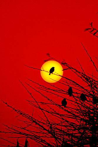 Watching the sun go down! | by rohtas