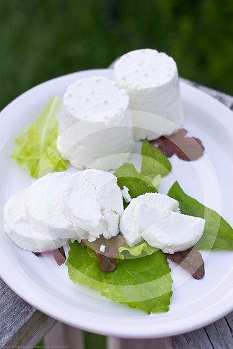 Making Chevre: Completed! | by nikaboyce