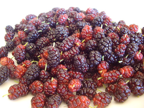 Mulberries | by swampkitty