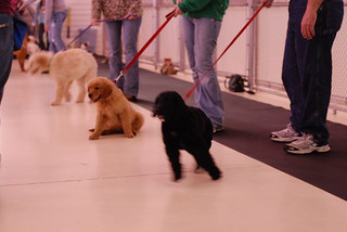 Charley's first puppy class | by Marcy Talks with Hands