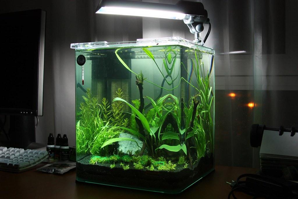 dennerle nano 20l aquarium my new dennerle nano 20l aquari flickr