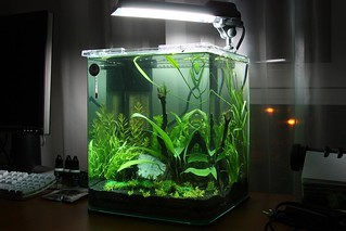dennerle nano 20l aquarium my new dennerle nano 20l aquari flickr. Black Bedroom Furniture Sets. Home Design Ideas