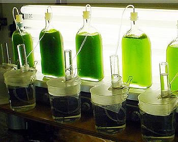 Diy Algae Hydrogen Bioreactor 2004 Diy Algae Hydrogen