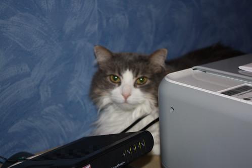 male cat spraying indoors