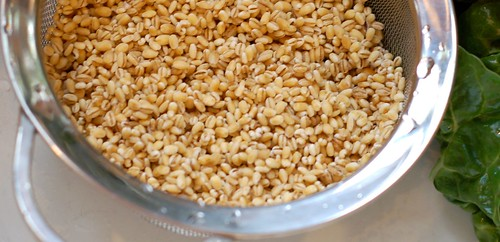 Rinsing the Barley by Eve Fox, Garden of Eating blog, copyright 2011 | by Eve Fox
