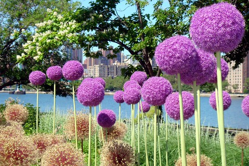 round flowers; Manhattan (technically) | by Global Jet