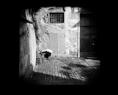 black_genova | by catwall_elle curotto