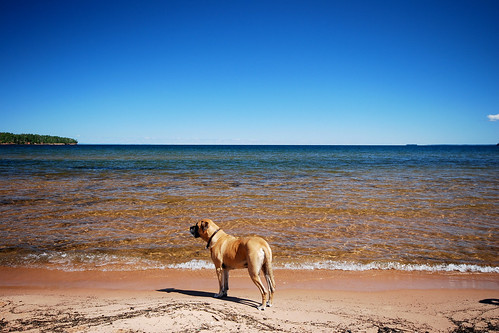 beach dog | by neon.mamacita