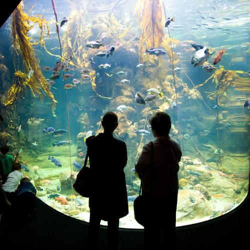 Steinhardt Aquarium San Francisco 39 S Academy Of Sciences